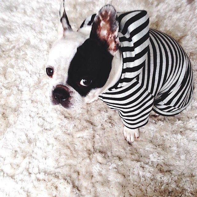 Lovely-Pepa, el perrito que le da nombre al blog :)